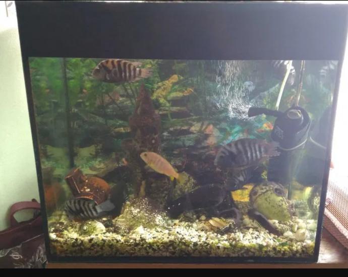 Акваріум 80л. зі всім комплектом + рибки